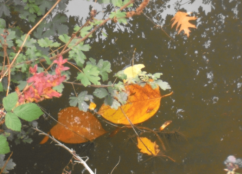 Chris Uray Zen Blaetter Herbst bunt Wasser Foto Kunst photo art